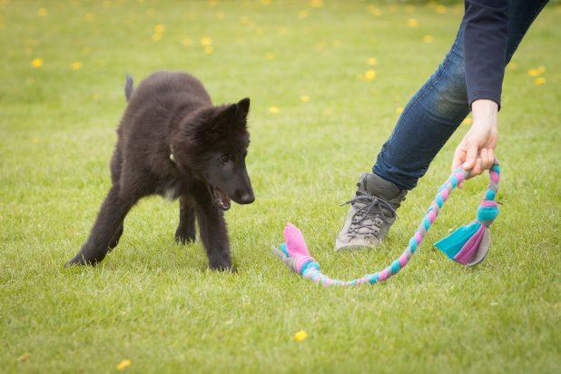 puppycursus puppygym spel