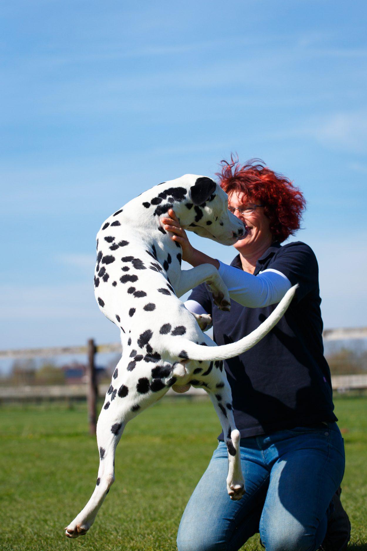opsringen tegen mensen, feestdagen met honden