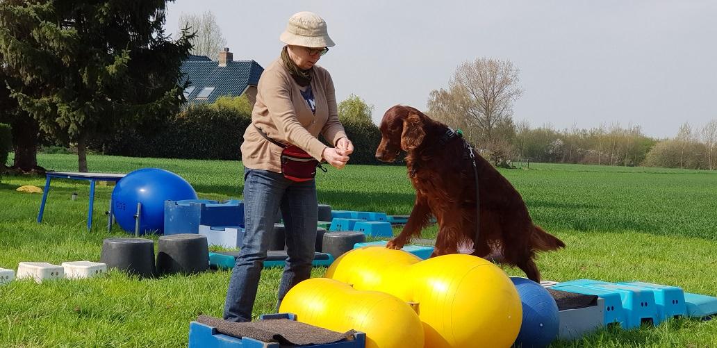 Recensie hondenschool Jaap en Alida vd Willigen