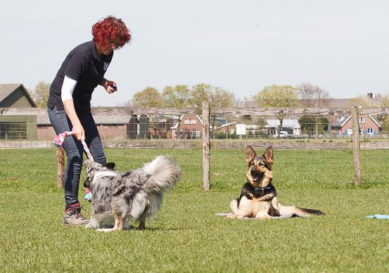 meerdere honden trainen